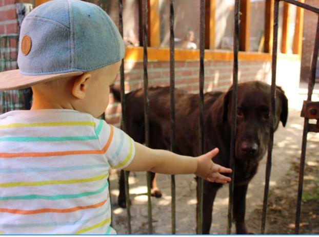 Waarom ik niet zo blij ben met loslopende honden