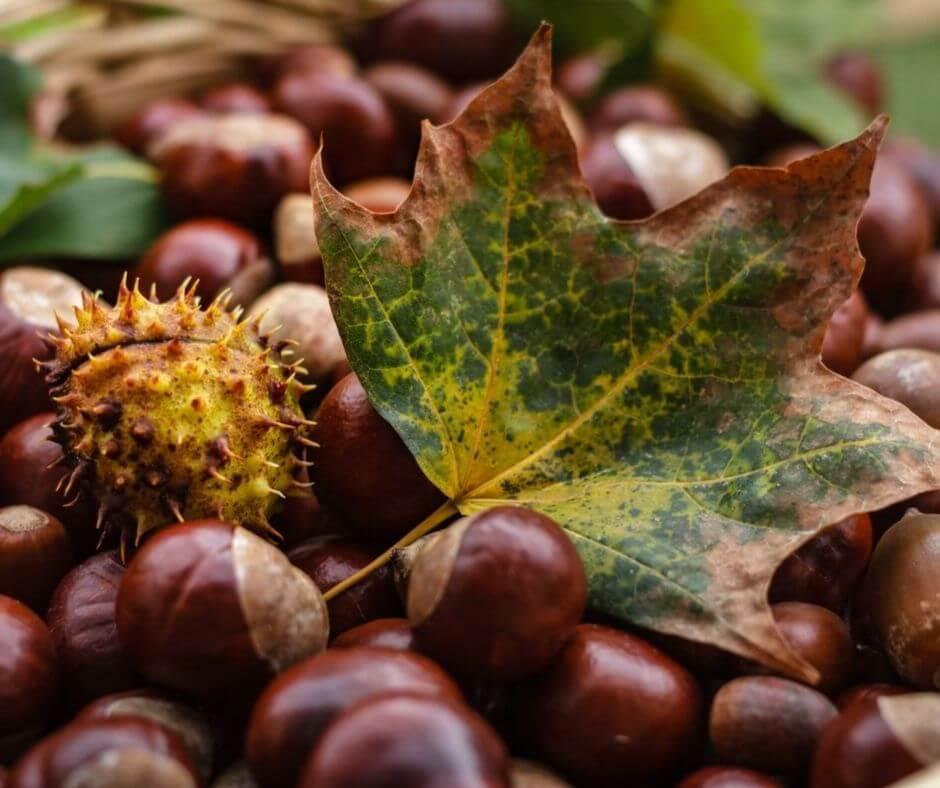 9 typische dingen die je in de herfst kunt doen