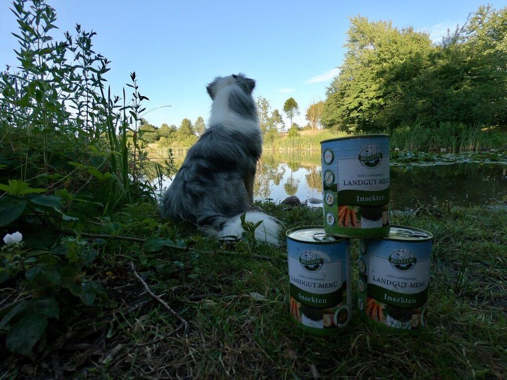 Bellfor: gezond hondenvoer op insectenbasis