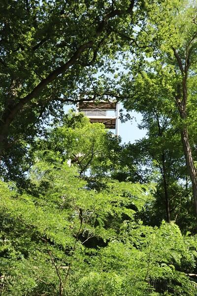 kabouterpad-in-odoorn-uitkijktoren